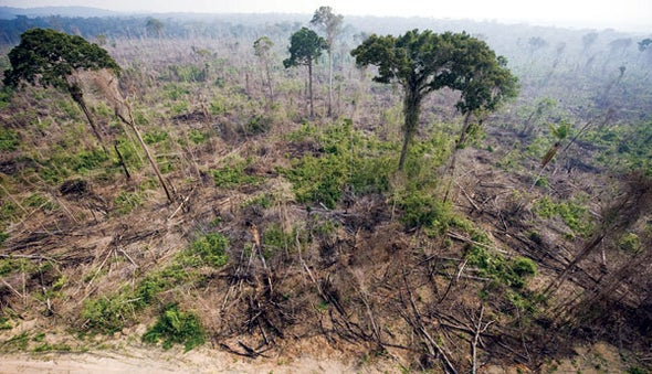 economic effect of deforestation