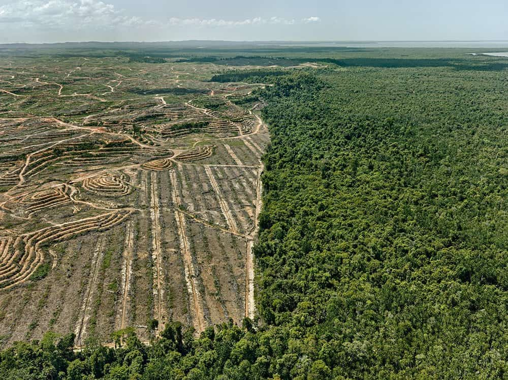 deforestation environmental issues