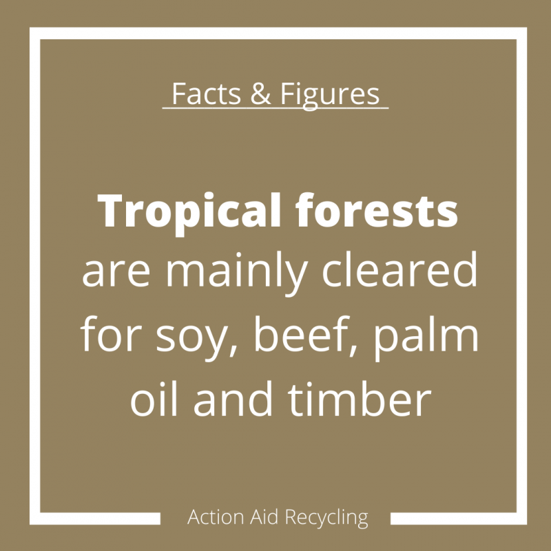 Solutions for Deforestation facts and figures infographic answer