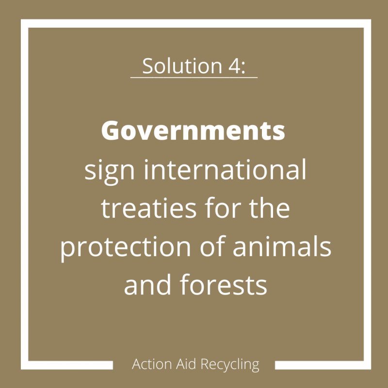 Solutions for Deforestation facts and figures infographic 4