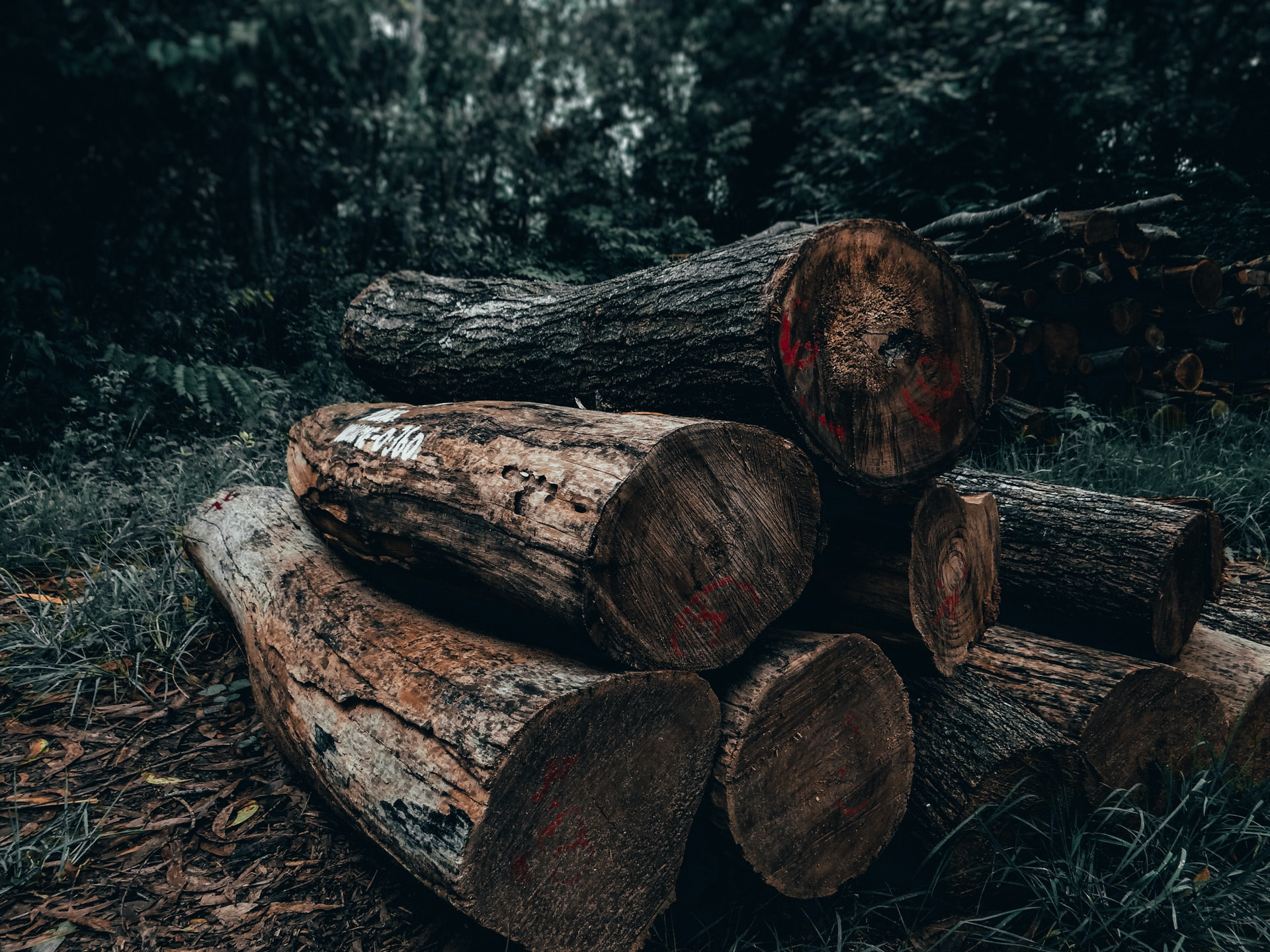 Solutions to deforestation