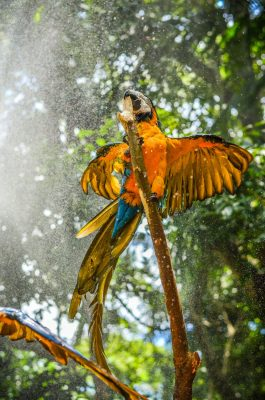 Bird in the Amazon