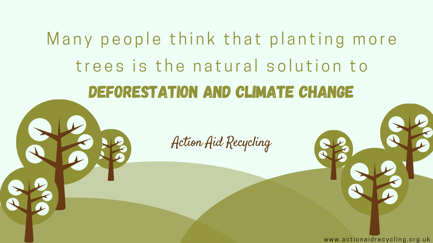Solutions to Stop Deforestation That Do Not Work