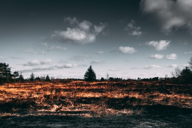 oil sands and forest fires
